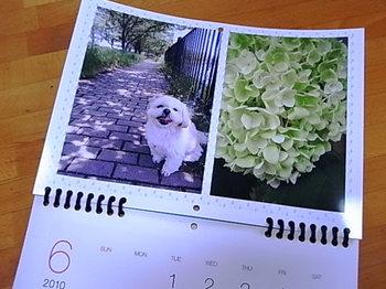 2010_0503_104831-RIMG0090.JPG